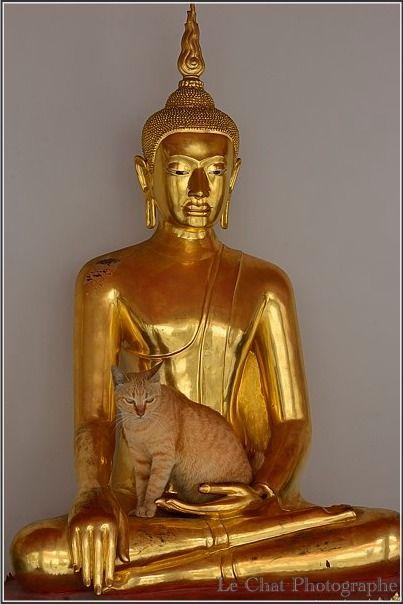 La statue de Bouddha et le chat roux ,Bangkok