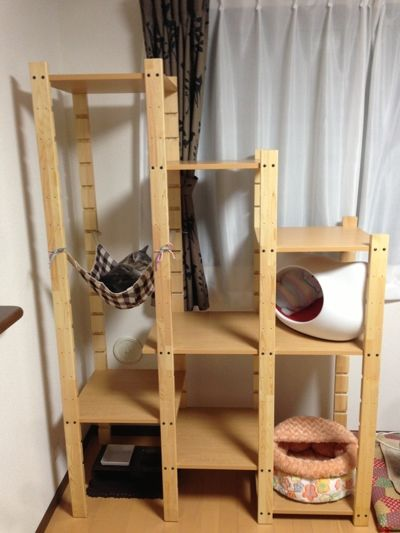 自作キャットタワー - 猫がいっぱい
