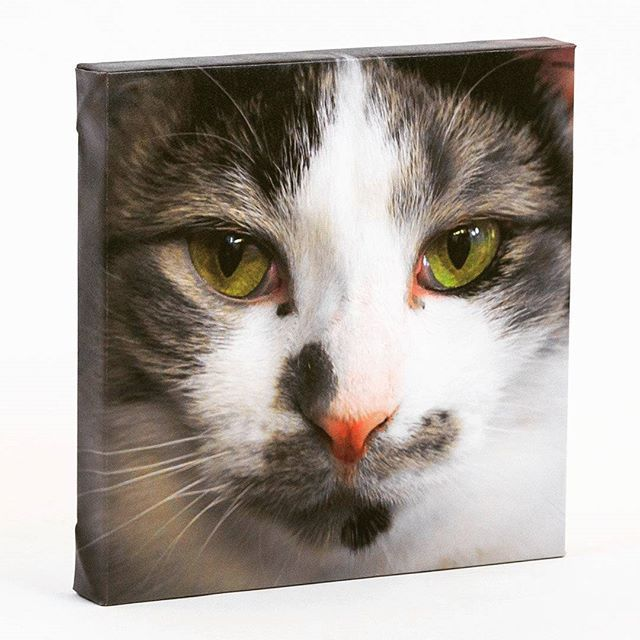Would you like to preserve the memory of your pet for many years to come?  Visit ABC Fine ART and check out our Archival Canvas printing services.  abcfineart.com  #art #photography #photos #printing #vancouver