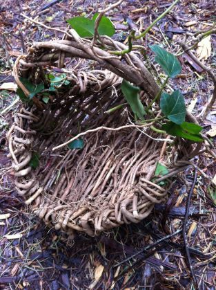 Making baskets from ivy or blackberry vines