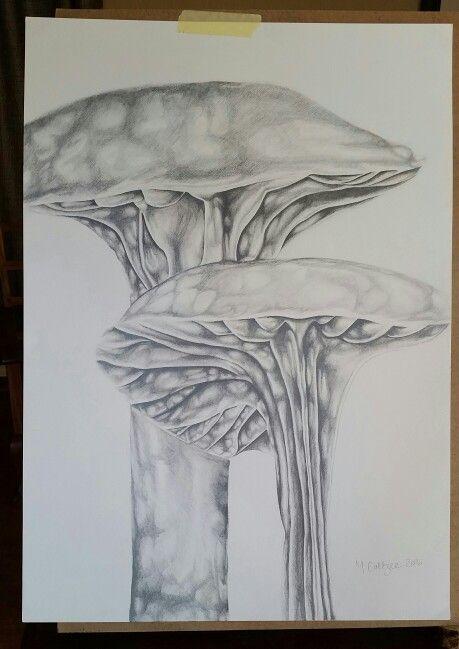 A2. Mushroom. Graphite Pencil