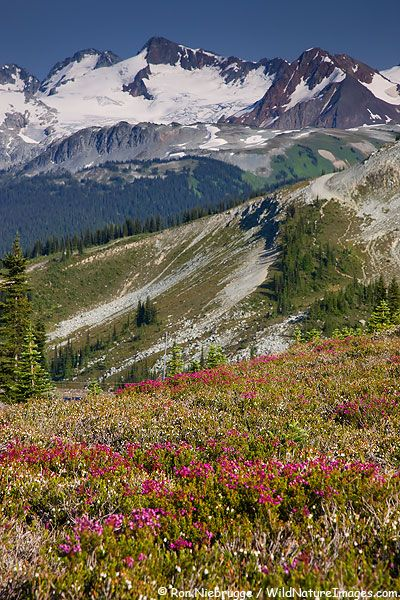 Whistler Mountain, Whistler, British Columbia, Canada