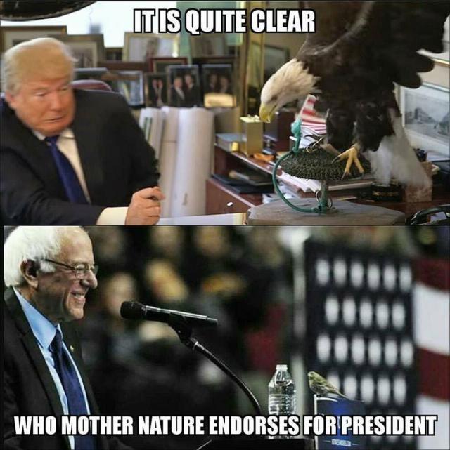 Humorous memes inspired by Democrat Bernie Sanders's 2016 presidential campaign.