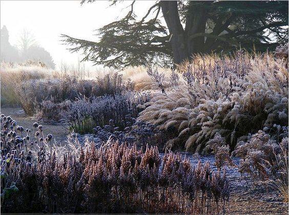 winter grasses, piet oudolf.