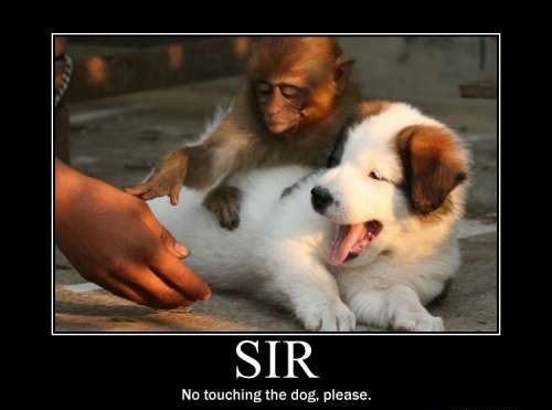 Sir.... No touching the dog, please.: Animal Pictures, Funny Pics, Animal Humor, Funny Pictures, Funny Stuff, Funny Animal, So Funny, Monkey, Demotivational Poster