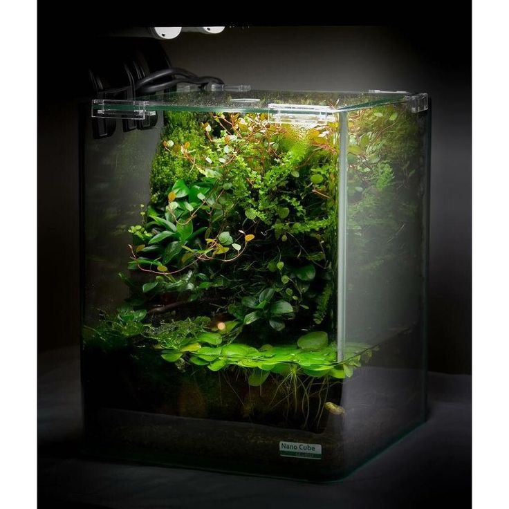 8163 Best Fish (freshwater) And Aquarium Images On