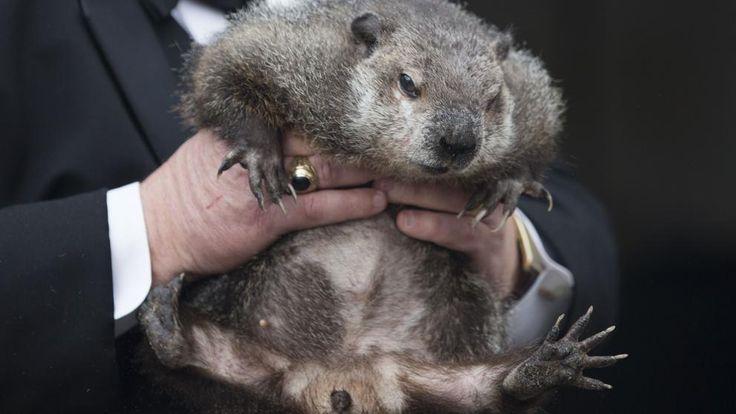 Día de la Marmota: Todos pendientes de la marmota Phil