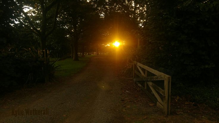 Looking out the gate on an Autumn evening.