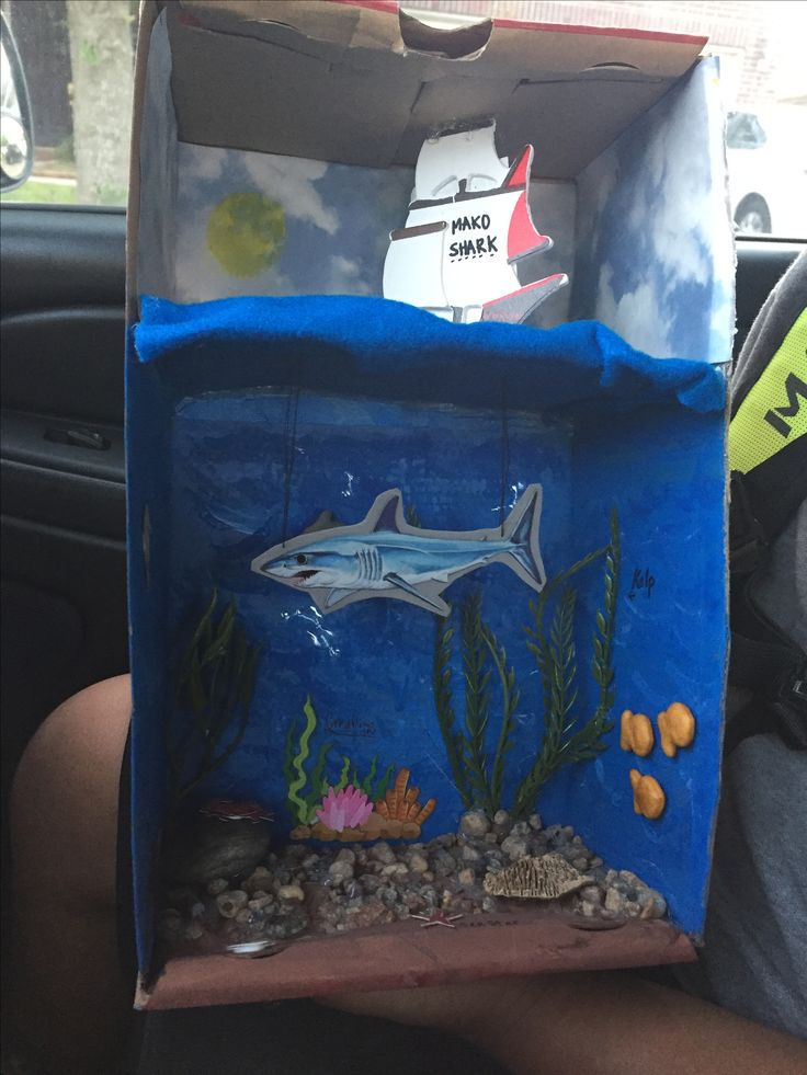 School project  Shark habitat