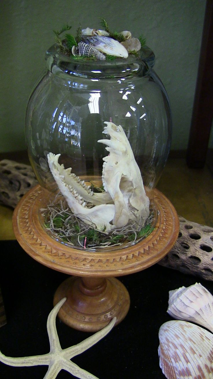 My taxidermy Possum skull under glass I created with a vintage pedestal and dome, skull, moss, shells and stones. Available at www.magomagicshop.com