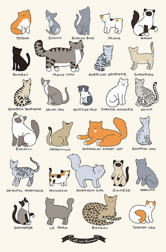 """CAT BREEDS,"" by Yasmine Surovec via Flickr -- From the creator of the wonderful cat cartoon, ""Cat vs Human"" (http://www.catversushuman.com/)"
