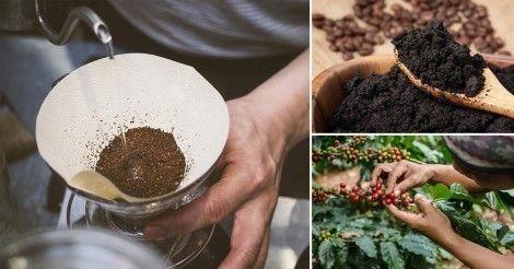 Cómo usar café para mejorar tu jardín o huerto/http://www.labioguia.com/notas/como-usar-cafe-para-mejorar-tu-jardin-o-huerto