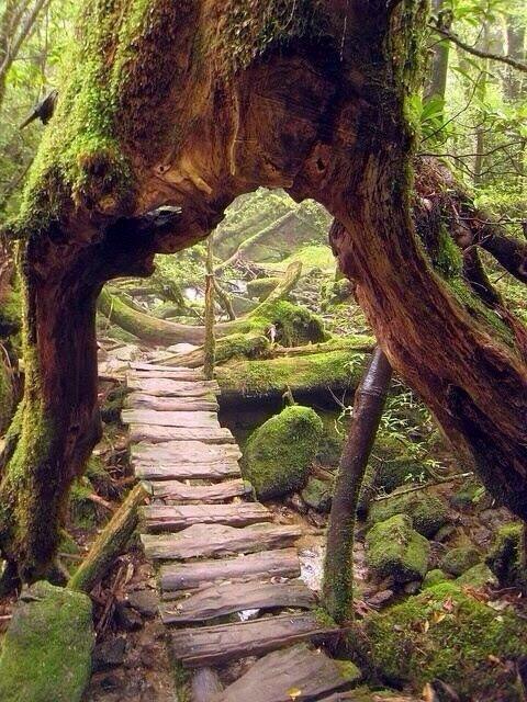 Imagem de um Caminho de madeira através de uma floresta em Yakushima, Japão