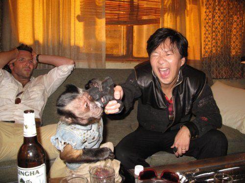 Bradley Cooper & Ken Jeong.. Don't judge me monkey!!!