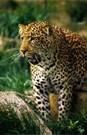 rainforest - Bing Images