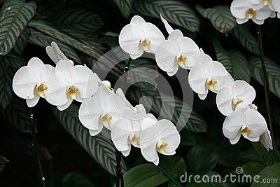 White orchids in a garden