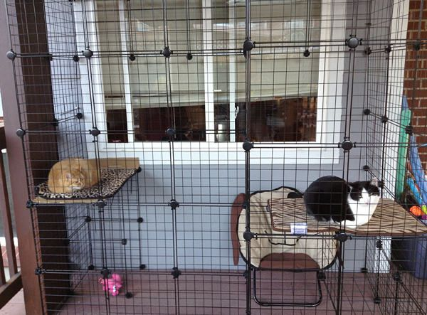 A Neat Catio Safe Licking Room Time Cats City