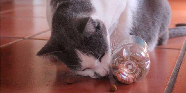 Scheduled Feeding Time Vs Free Feeding For Cats Nom Nom