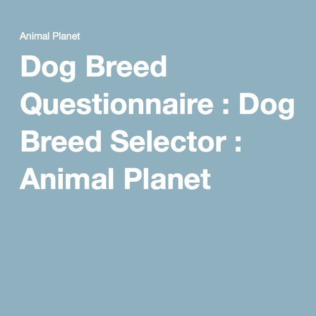 Which Dog Breed Is Right For Me Animal Planet