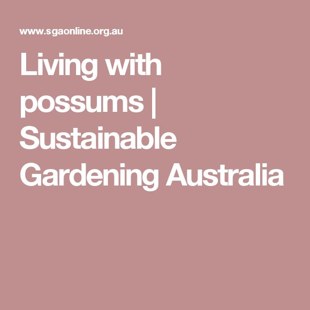 Living with possums | Sustainable Gardening Australia