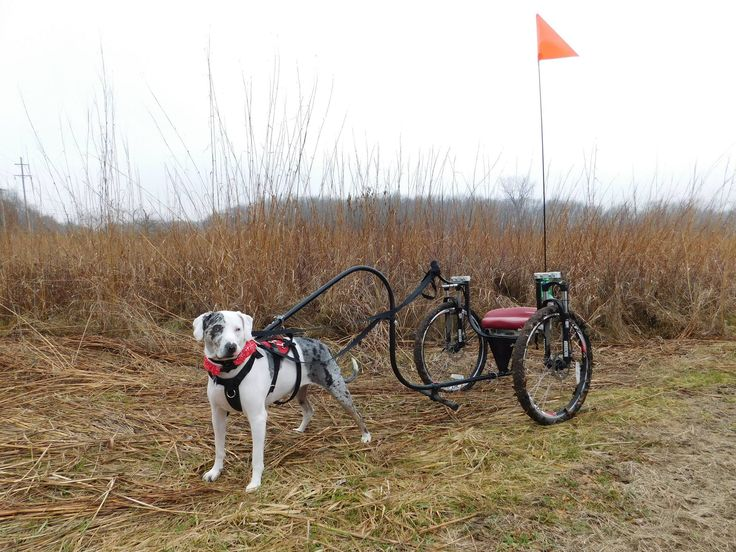 Image Result For Dog Cart On
