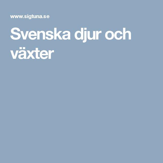 Svenska djur och växter