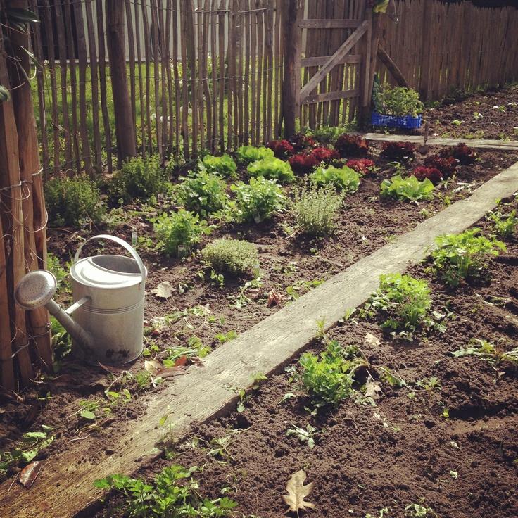 Planten en oogsten / Seizoen 2013