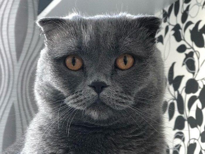 240 Food Names For Cats Cats Food Names Pet Names