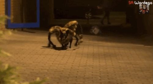 There's a new beast terrorising city streets at night… | This Giant Mutant Spider Dog Is The Stuff Of Nightmares