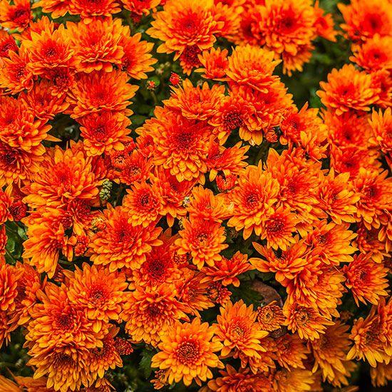 Best 25 Orange Plant Ideas On Pinterest Shade Plants