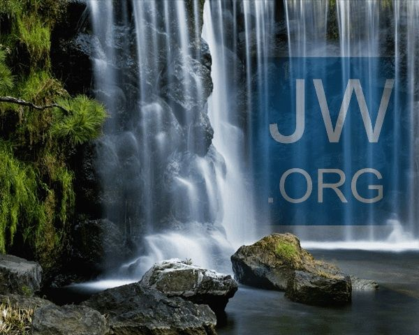JW.org available in 300+ languages (ASL  other sign languages included ). More languages than any other web site out there. All because everyone deserves the chance to hear the good news of God's Kingdom.  JW.org has the bible  study aids to read, watch, listen or download.