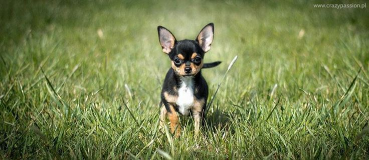 Kisu as a puppy, spring -14