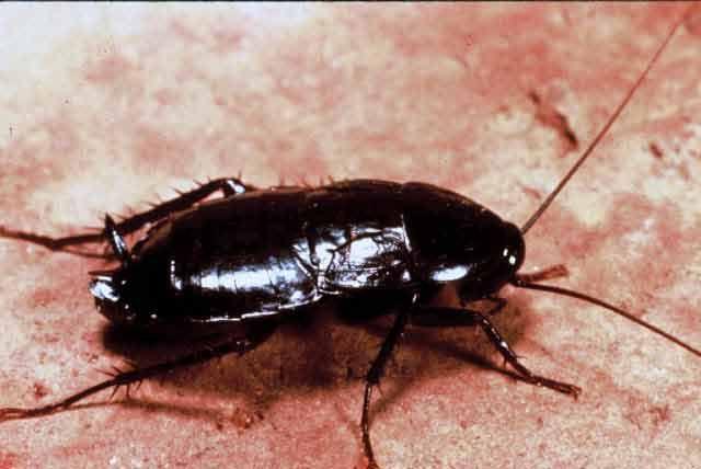 Cum am scăpat de insectele din casă doar cu 5 lei - Secretele.com