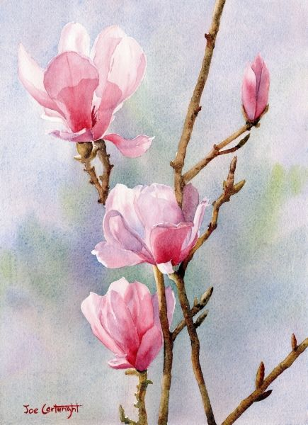 Watercolor painting by Joe Cartwright of Pink Magnolias with a soft background.