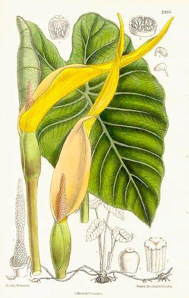 17 migliori idee su piante da ombra su pinterest for Giardino e nome collettivo