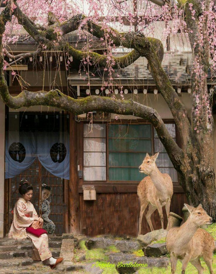 Nara Japón me enamora
