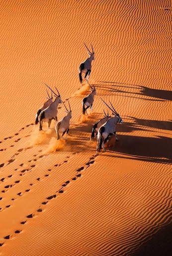 Namib desert by Martin Harvey