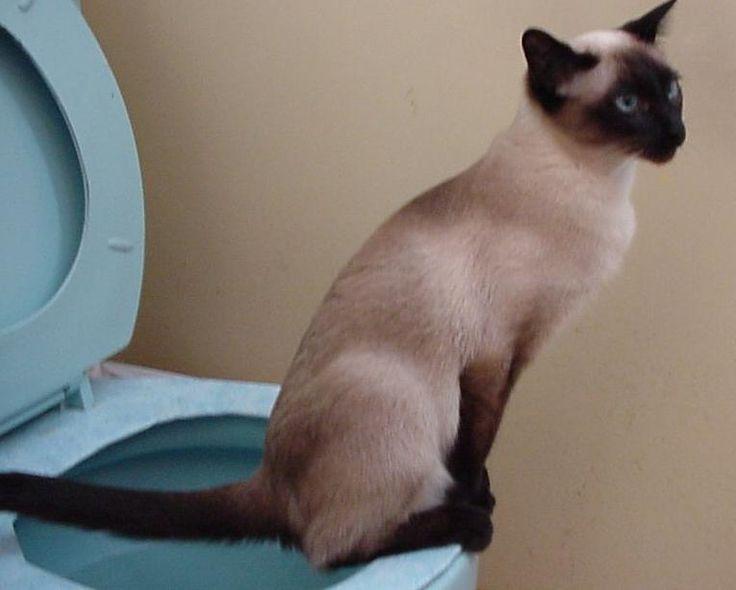 5 techniques très efficaces pour enlever les odeurs d'urine de chat