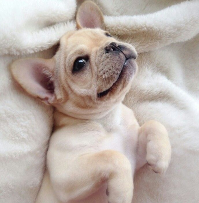 """Click visit site and Check out Best Frenchie Shirts. This website is outstanding. Tip: You can search """"your first name"""" or """"your favorite shirts"""" at search bar on the top. #Abyssinian #Cat"""