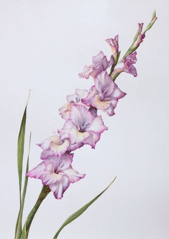 watercolor gladiolus tattoo - Google Search