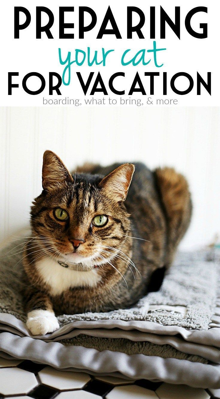 Preparing Your Cats for a Family Vacation and Pet Boarding #LitterOdorRevolution AD