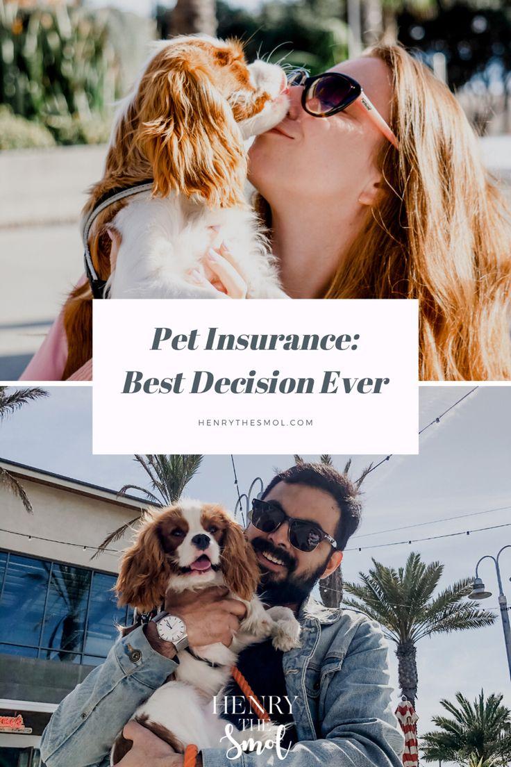 Pet Insurance BEST decision ever! in 2020 Pet insurance