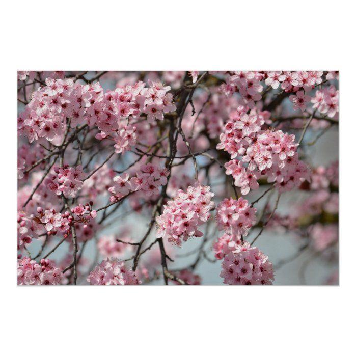 Cherry Blossom Tree Poster Zazzle Com In 2021 Cherry Blossom Flowers Blossom Trees Flowering Trees