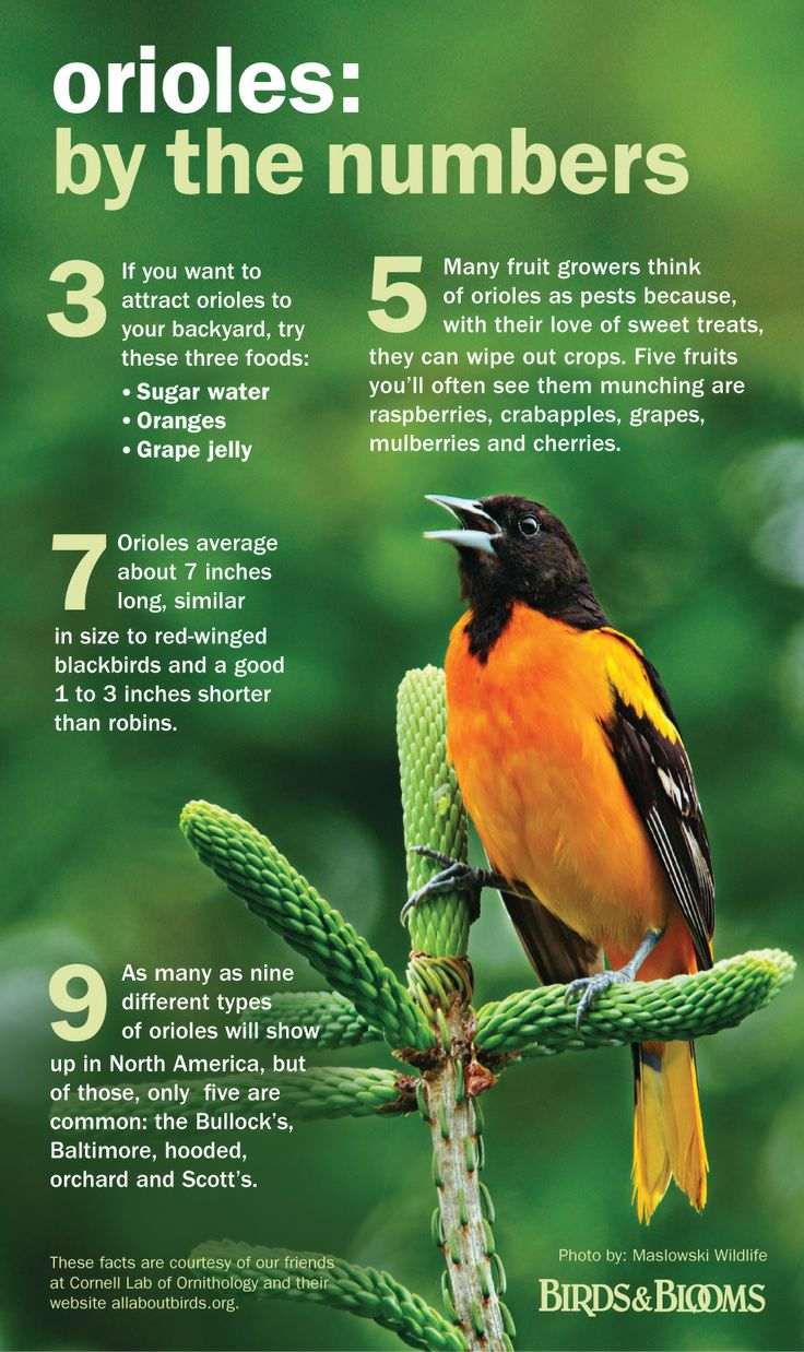 84 best gardens and birds images on pinterest for the birds