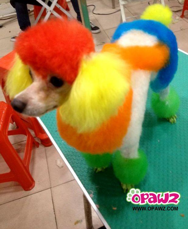 opawz pet hair dye grooming