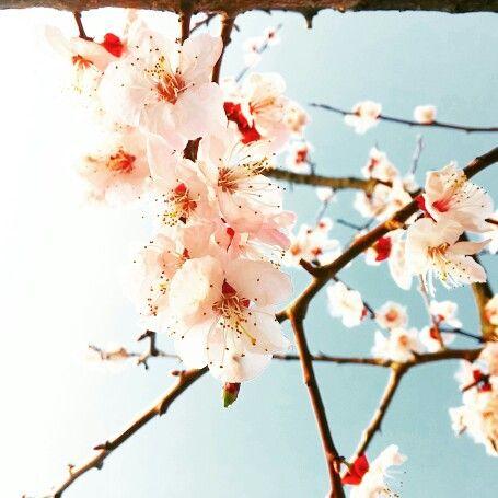 내 마음 4월의 꽃이되어 봄기운에 나풀거리니 덩달아 지나간 추억까지 솔솔 불어온다. #봄 #벚꽃 #봄기운 #정동길