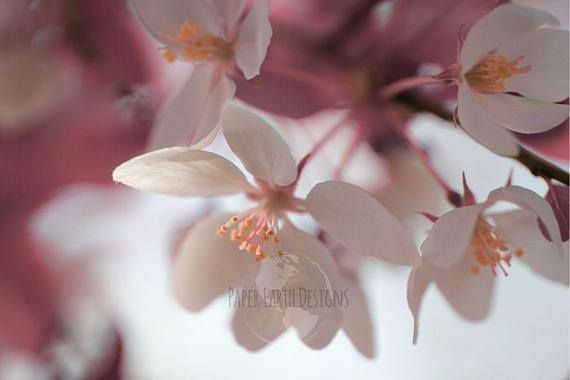 Digital download pink and white apple blossoms instant art
