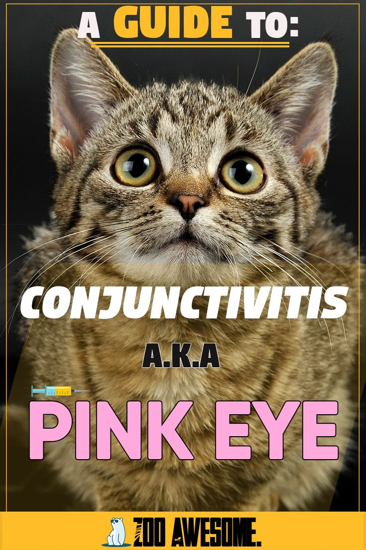 A Guide To Conjunctivitis Or Pink Eye In 2020 Cat Advice Cat Language Pink Eyes