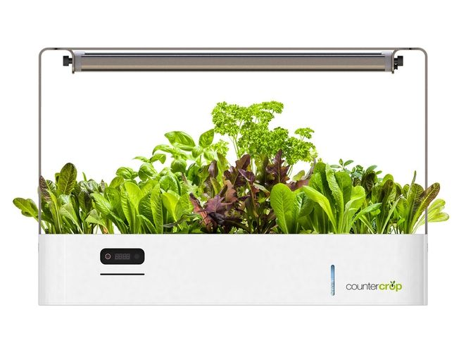 "Indoor ""smart"" garden features advanced LED lighting which mimics natural light patterns for faster growth cycles"
