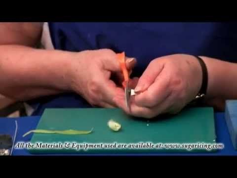 Making a Flower Paste Christmas Rose (Part 1)